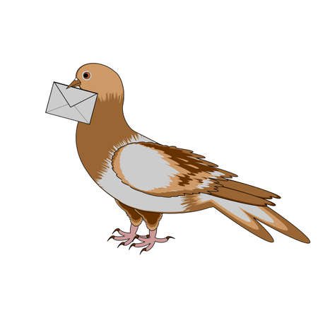 A pigeon with a letter on a white background. Vector