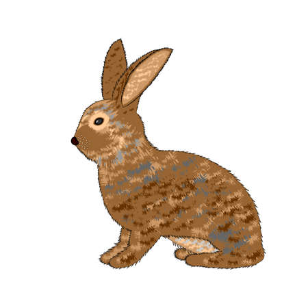 sideview: A sideview of a rabbit on a white background.  Illustration