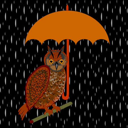 An owl with umbrella in the rain.  Vector