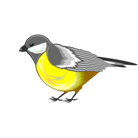A cute titmouse isolated on a white background. Vector-art illustration