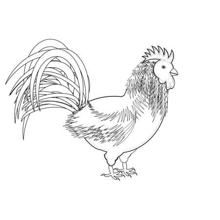 A monochrome sketch of a rooster. Vector-art illustration on a white background