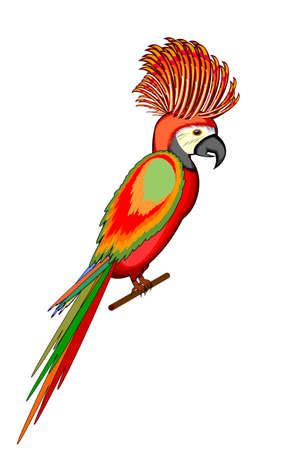 A parrot macaw isolated on a white background. Vector-art illustration Vector