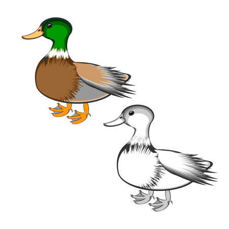 A duck isolated on a white background. Colorful and monochrome versions. Vector-art illustration