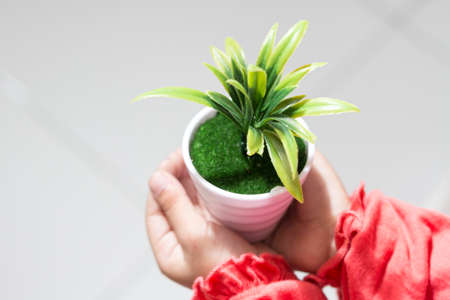 Kids hands holding a pot of green plant in a white pot.