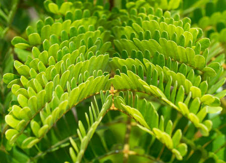 the texture of green leaves
