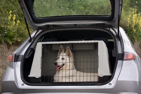 cane da pastore svizzero bianco nel canile di un'auto