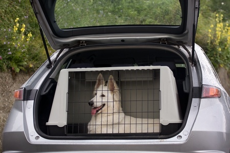 swiss white shepherd dog in the kennel of a car