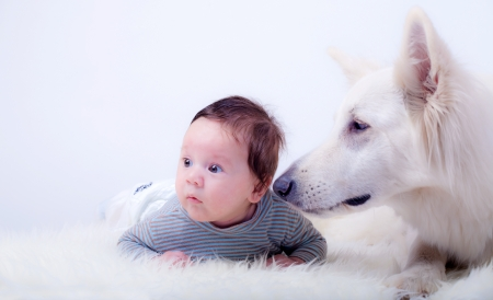 Sweet baby boy and his friend, a white swiss shepherd dog