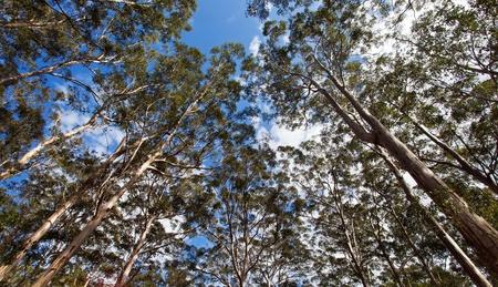 karst forest, Margaret river, We Australia