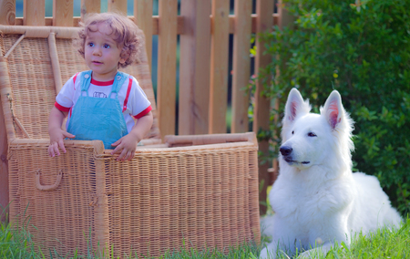 Bimbo in the basket near a dog, white swedish shepherd