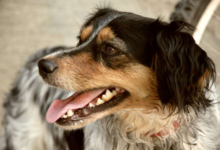 dog with open mouth, side view close-up photo