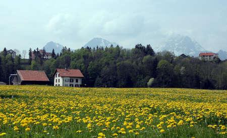 dandelion snow: Alpine landscape. Switzerland.