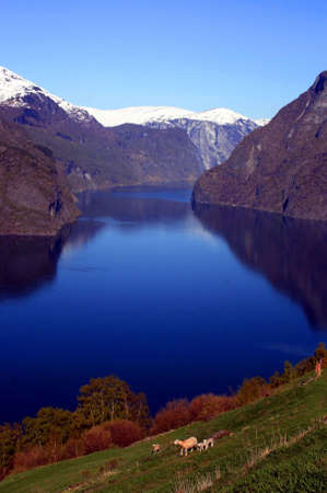 Beautiful view of the Norwegian fjord. Scenery near Flam and Aurland.