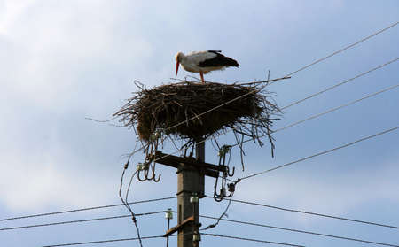 Nest with stork on a column lines Stock Photo - 13586938