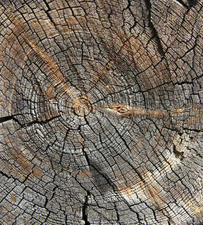 Cracked section of wood texture photo