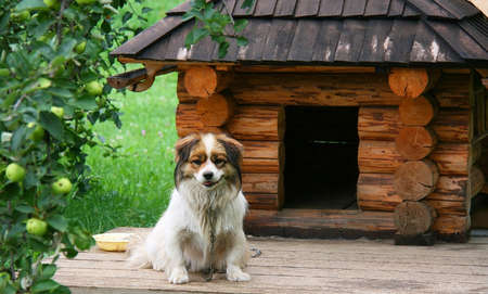 Lonely dog watching out near his doghouse Stock Photo