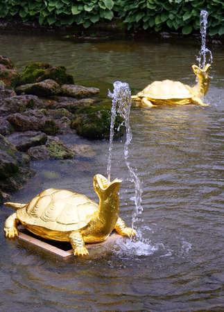 peterhof: Turtle fountain in Peterhof, Russia