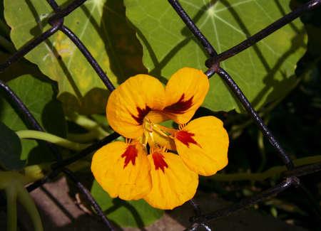 Flower on a background rabitz
