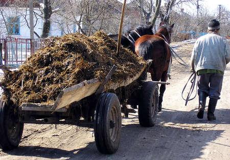 pus: L'uomo � la via del villaggio, vicino al carro trainato da cavalli da cui pus