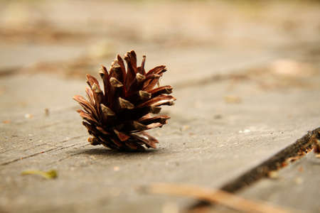 pine cone: Pine cone on wooden background. Shallow depth of field.