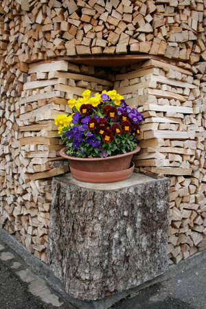 niche: Flowers on the stump in niche among fire wood