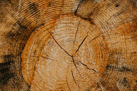 Cracked section of wood texture