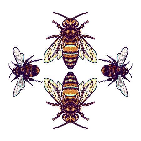 L'illustrazione dell'ape che utilizza uno stile di disegno a mano è continuata con la colorazione digitale, questa è una combinazione di stile di disegno a mano e colore digitale