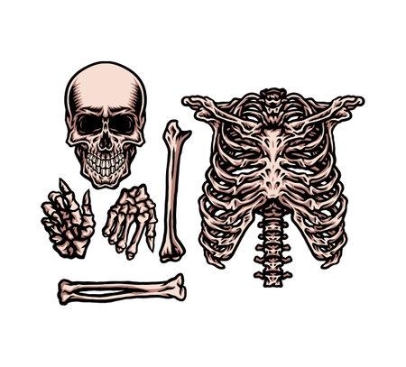 Human skeleton set, hand drawn line style with digital color, vector illustration