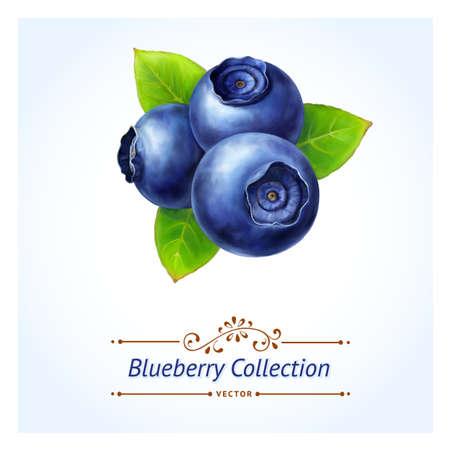 frutos rojos: Blueberry, hojas y bayas aisladas sobre fondo blanco pintura digital realista ilustraci�n vectorial