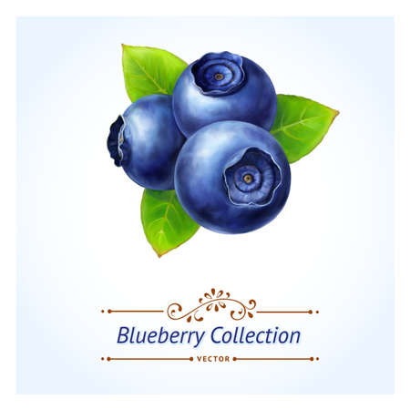 Blueberry, leaves and berries isolated on white background  Realistic digital paint  Vector illustration  Ilustracja