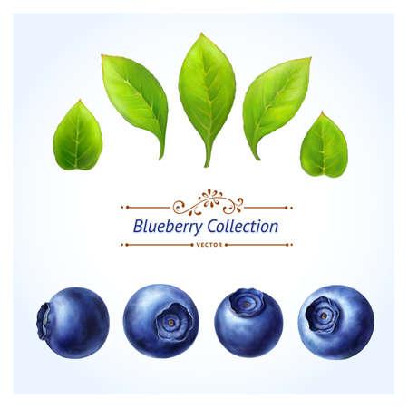 Blueberry set, bladeren en bessen op een witte achtergrond Realistische digitale verf U kunt uw eigen compositie met set maken Vector Illustratie