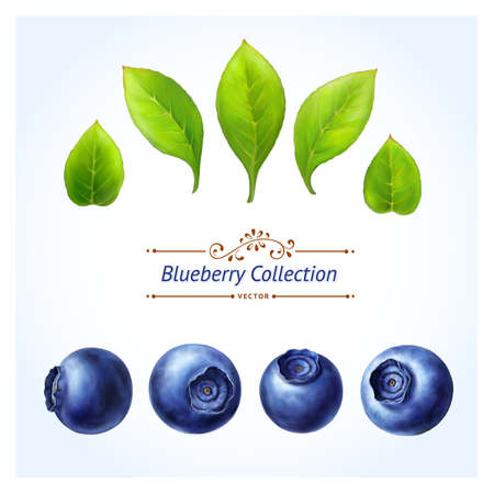 Blueberry set, leaves and berries isolated on white background  Realistic digital paint  You can make your own composition with set