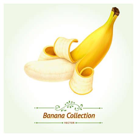 バナナ果実のベクトルのバージョンです。白い背景上に分離。現実的なデジタル ペイント。  イラスト・ベクター素材