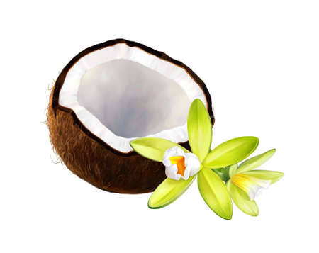 Vanille en kokosnoot op een witte achtergrond. Realistische digitale verf. Raster illustratie.