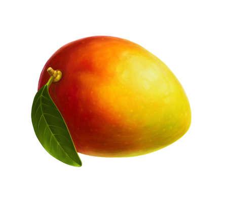 白い背景の上のマンゴー。現実的なデジタル ペイント。
