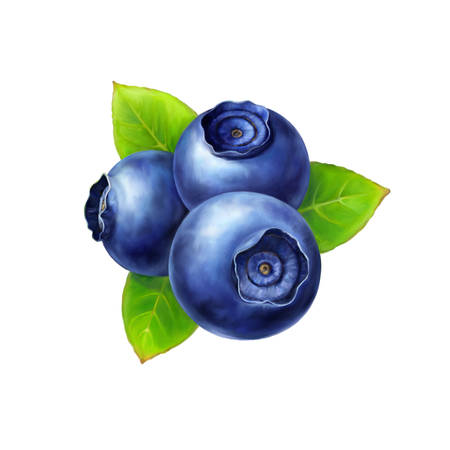 Blueberry, leaves and berries isolated on white background. Realistic digital paint. Raster illustration. Stock Photo