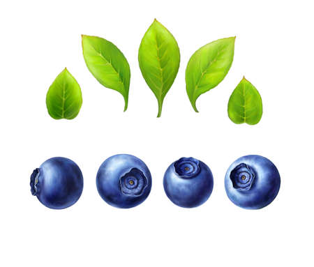 with sets of elements: Blueberry set, leaves and berries isolated on white background. Realistic digital paint. You can make your own composition with sets elements. Raster illustration.