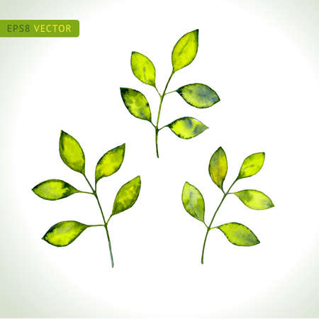 Leaves watercolor set. Vector