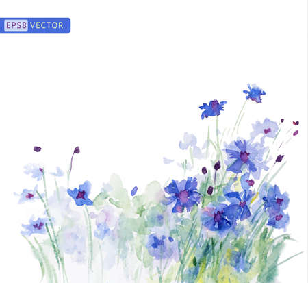 Watercolor blue cornflowers. Vector