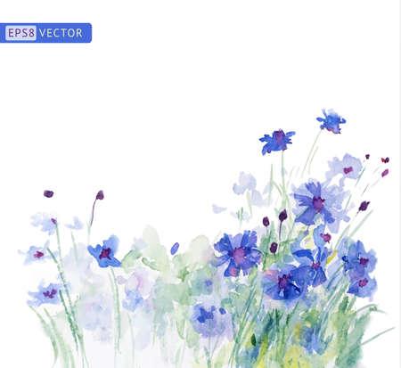 cornflowers: Watercolor blue cornflowers.