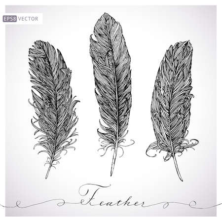quill pen: Feather hand drawn set.