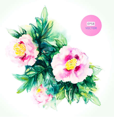 Watercolor pink peony. Vector floral background Vector