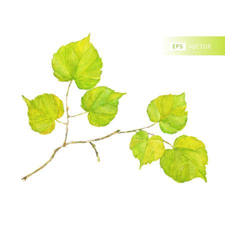 ベクトル水彩葉。ビンテージのテンプレートです。スクラップブッ キングのための標本。白で隔離されます。葉の秋のパターン。秋のテーマです。