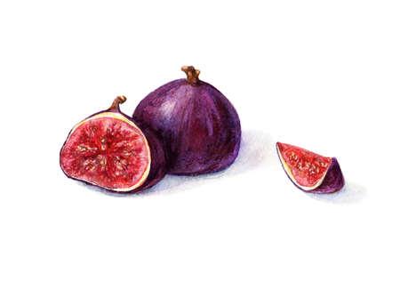 Watercolor figs Фото со стока - 37297039