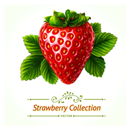 fresh strawberries: Strawberry, leaves and berries isolated on white background. Realistic digital paint. Illustration