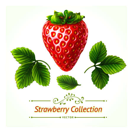 Strawberry set, leaves and berry isolated on white background. Realistic digital paint. You can make your own composition with set's elements. Иллюстрация