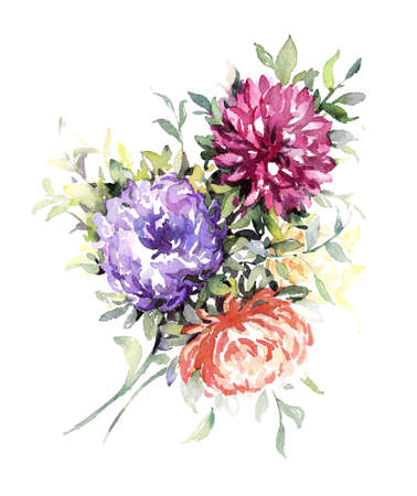 Watercolor lilac, pink and red asters. Hand made illustration. Stock Photo
