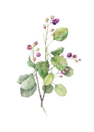 Botanical illustration. Floral print Stock Photo