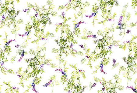 sweet pea flower: Abstract background base on watercolor painting. Texture for textiles, fabrics, souvenirs, packaging, greeting cards and scrapbooking. Hand drawn seamless pattern.