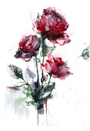 Rose.  illustration  on paper. Print or postcard with roses.